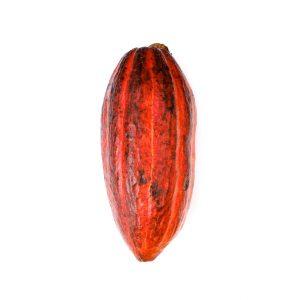 tableta chocolate negro ecologico uganda vanini gourmet leon