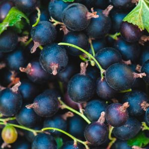 comprar vinagre balsamico grosella negra gourmet leon
